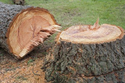 Stump-Removal-Manassas-VA